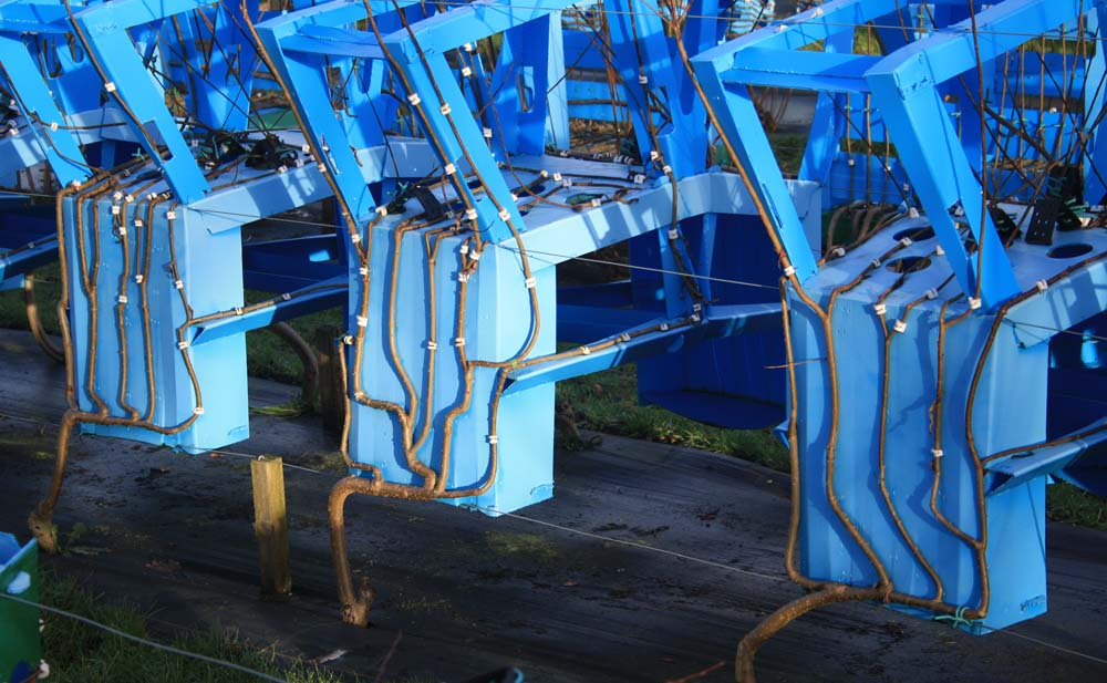 Fg_3_chairs_growing