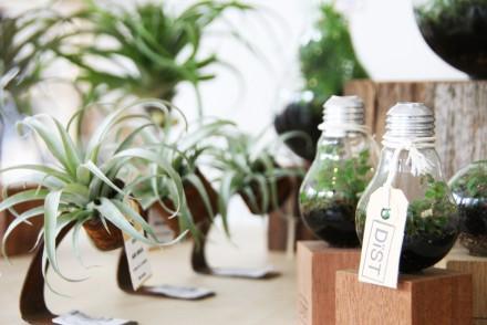 De planten van Dist zijn gemaakt met herbruikbare materialen