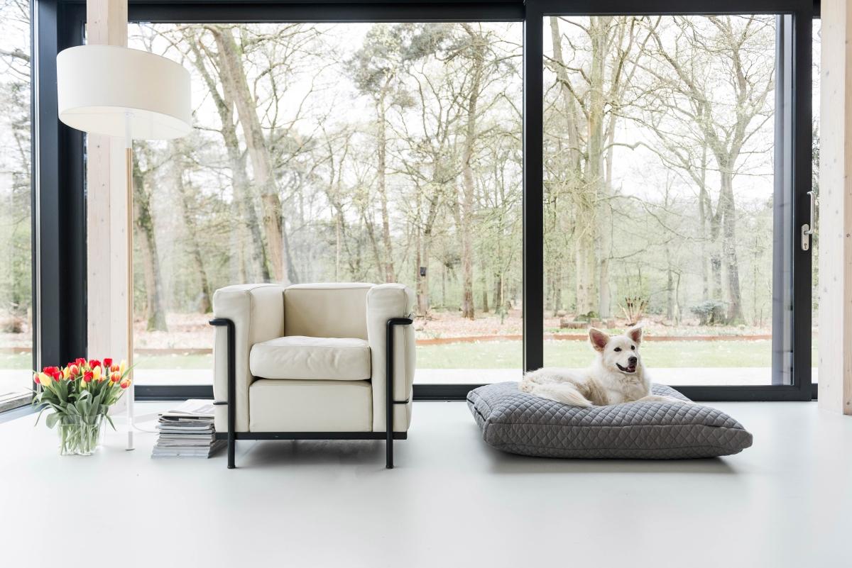 Design Voor Honden : Hotdog designs een interieurproof kussen voor hond en kat
