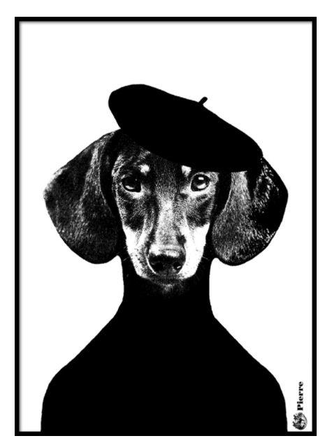Hond baret