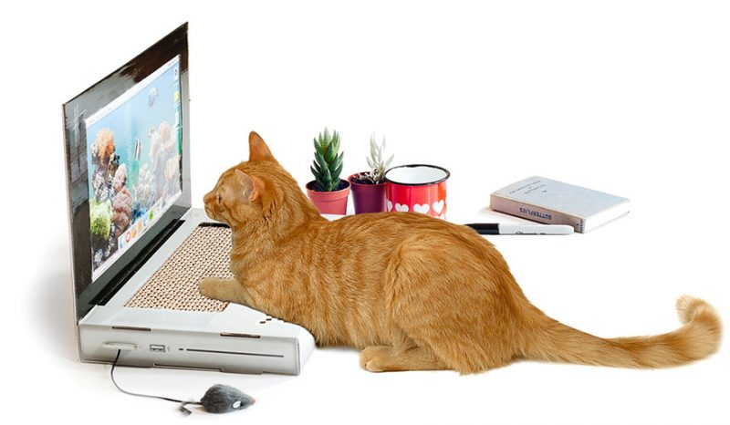 roomed-katten-laptop-800x466