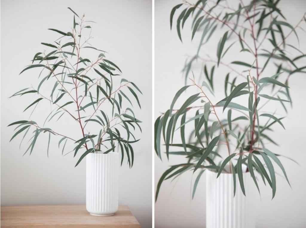 Plantjes samengevoegd