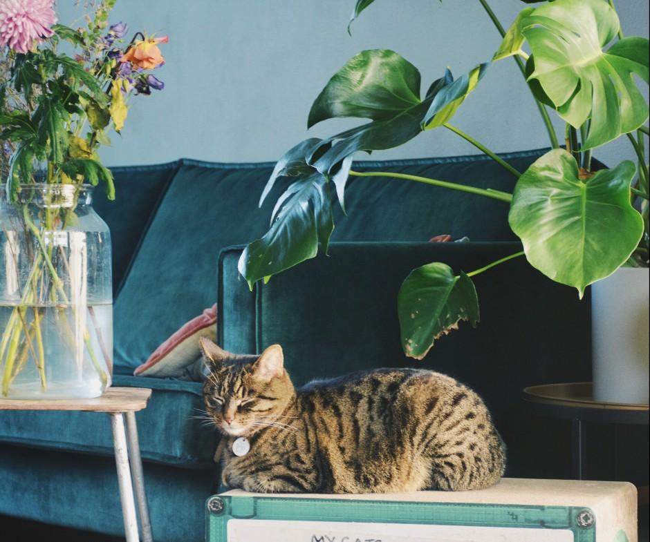 Tips voor een stijlvol én catproof interieur
